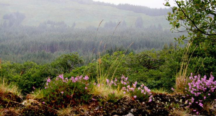 Roadtrip Schottland-Teil 2
